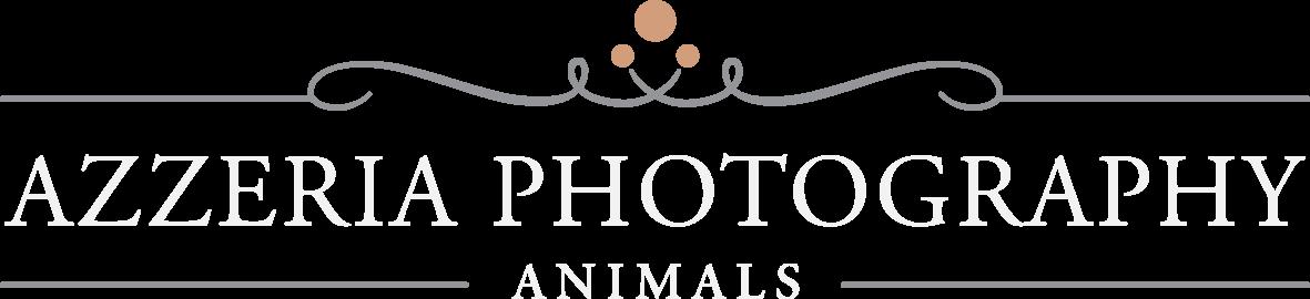 Huisdierenfotografie Assen Drenthe Groningen Friesland fotograaf