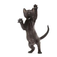 Katten fotografie door vakfotograaf huisdieren