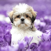 Honden fotografie door professionele fotograaf Assen