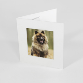 professionele luxe dvd passe partout foto lijst dierenfotografie assen